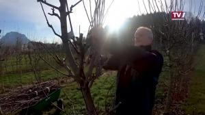 3000 verschiedene Obstsorten befinden sich im Obstgarten von Familie Strasser.