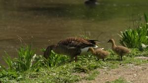 Nachwuchs im Cumberland Wildpark