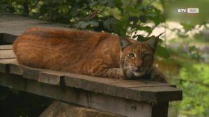 Neues Gehege für Bären und Wölfe im Tierpark Grünau