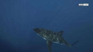 Der Hai - Millionen werden abgeschlachtet