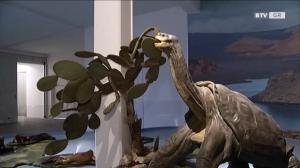 Eröffnung Evolutionsmuseum Schmiding