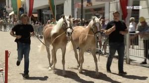 113. Pferdemarkt Vöcklabruck
