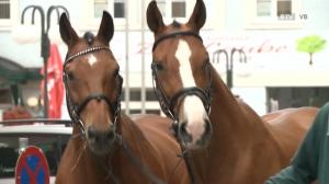 Pferdemarkt in Schwanenstadt