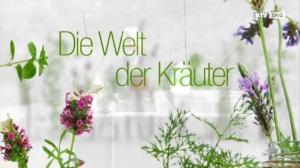 Die Brennnessel - eine der vielfältigsten nutzbaren Wildpflanzen!