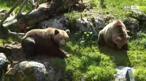 Tag der Tierpaten im Cumberland Wildpark Grünau