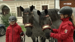 Pferdemarkt in Haag am Hausruck hat eine lange Geschichte