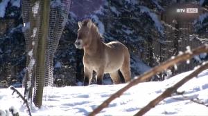 Tiere im Winter im Cumberland Wildpark