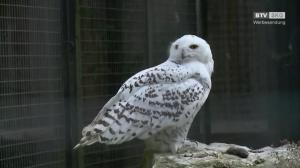 Cumberland Wildpark - Kinder fragen, Tierpfleger antworten!