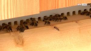 Retten wir die Bienen