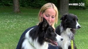 Neuer Sommersport für Hunde