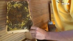 Echter Honig von den