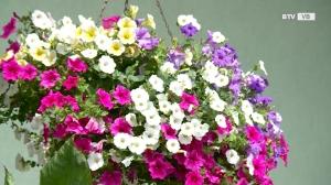 Tag der offenen Gärten Regau
