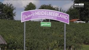 Steiner´s Heidelbeerland