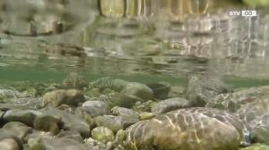 Auch Fische leiden unter der Hitze
