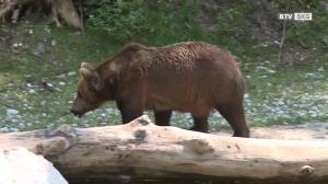 Tierpatenschaften im Cumberland Wildpark